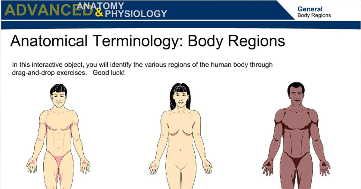 Anatomical Terminology Body Regions Wisc Online Oer