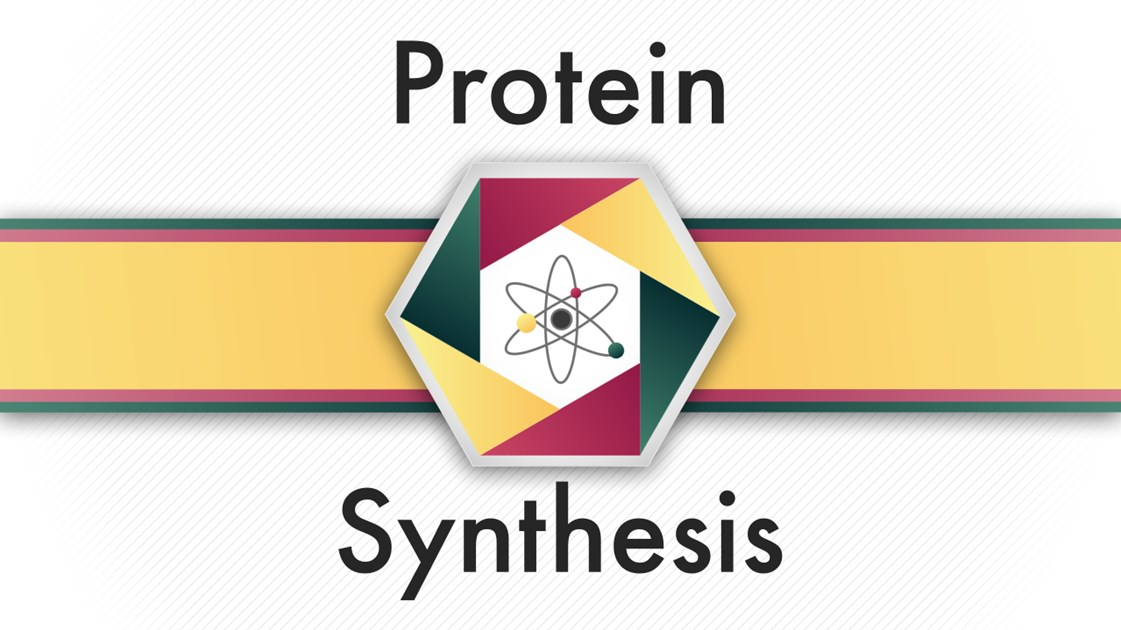 Image result for protein synthesis