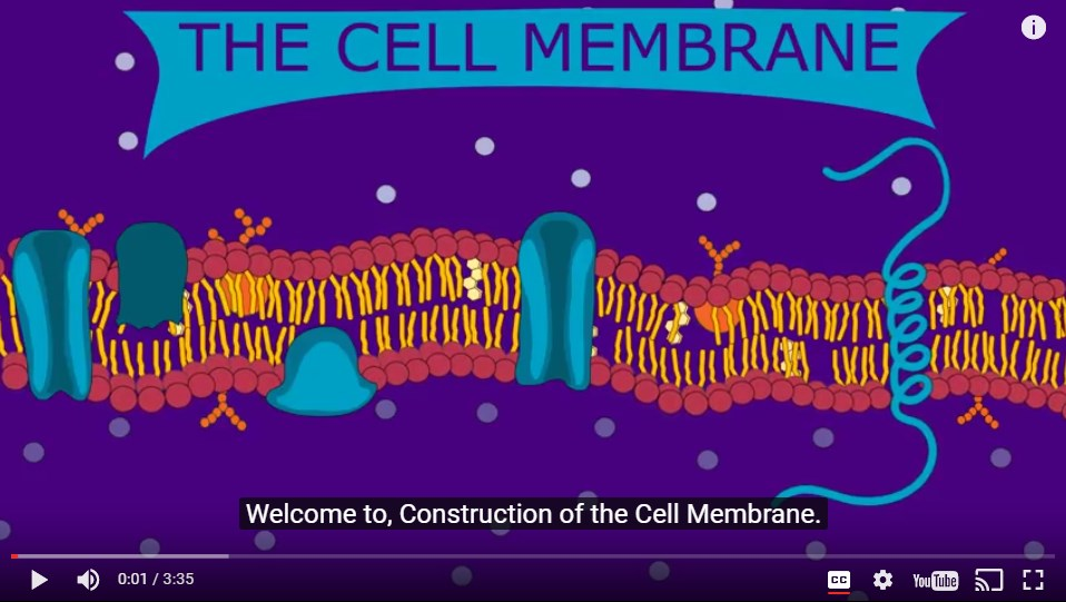 Construction Of The Cell Membrane Video Wisc Online Oer
