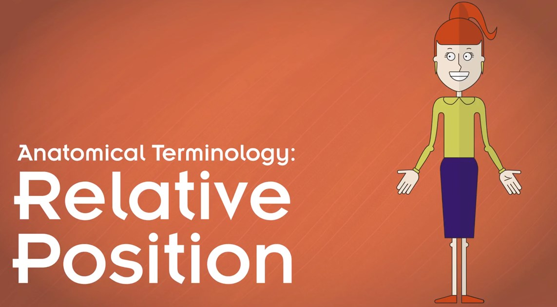 Anatomical Terminology: Relative Position Video - Wisc-Online OER