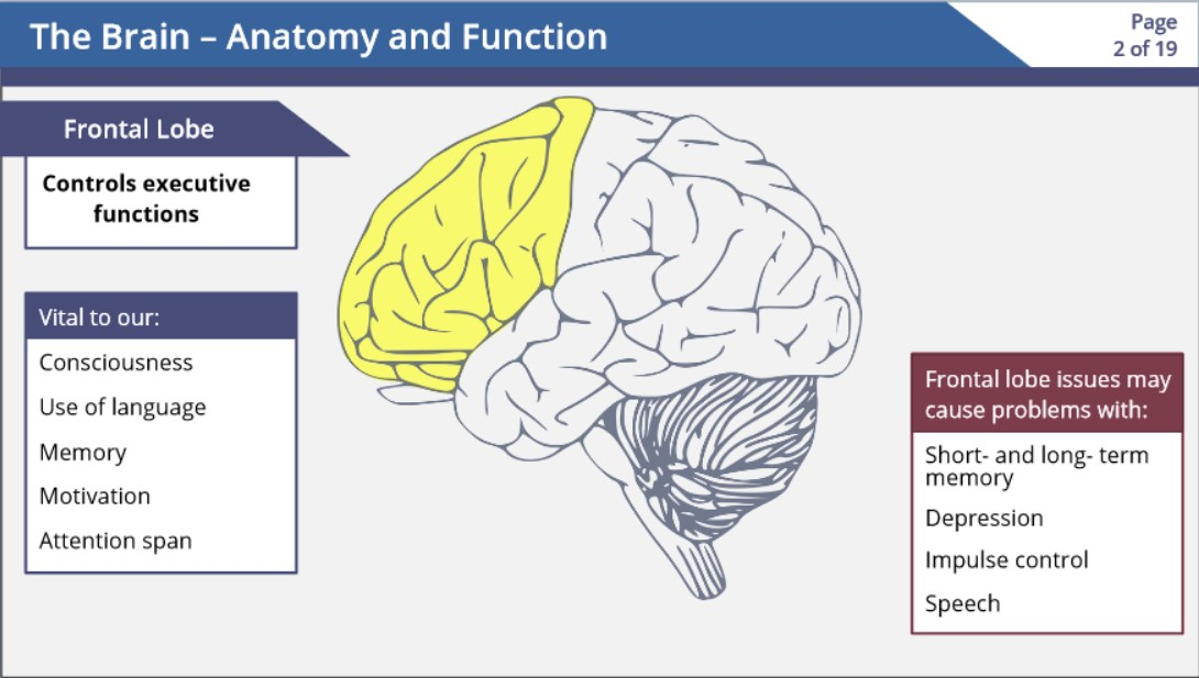 The Brain Anatomy And Function Screencast Wisc