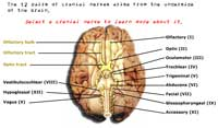 Life Science The 12 Cranial Nerves