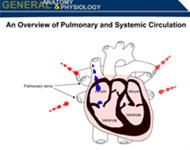 Health Science An Overview of Pulmonary and Systemic Circulation