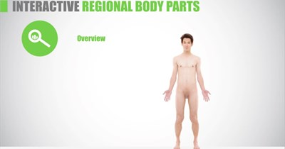 Health Science Regional Body Parts