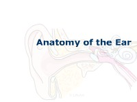 Health Science Anatomy of the Ear