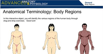 Health Science Anatomical Terminology:  Body Regions