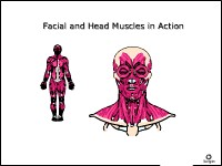 Health Science Facial and Head Muscles in Action