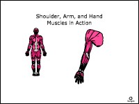 Health Science Shoulder, Arm, and Hand Muscles in Action